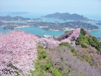 88_62積善山桜
