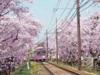 106_31桜トンネル列車