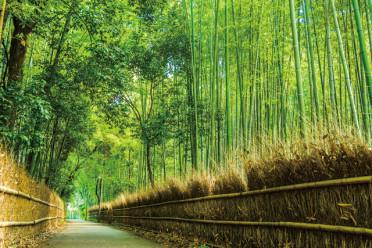 109_07嵐山・竹林