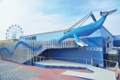 109_02マリホ水族館