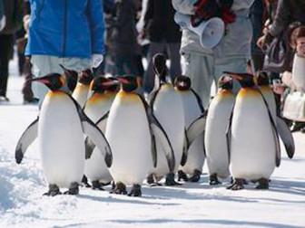 113_57ペンギンの散歩